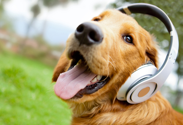Cute dog listening to music 1_1