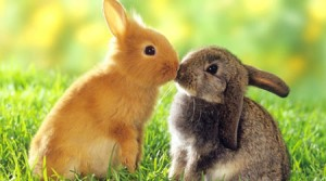 Cancer Sucks.  Here are two kissing bunnies to make up for it.